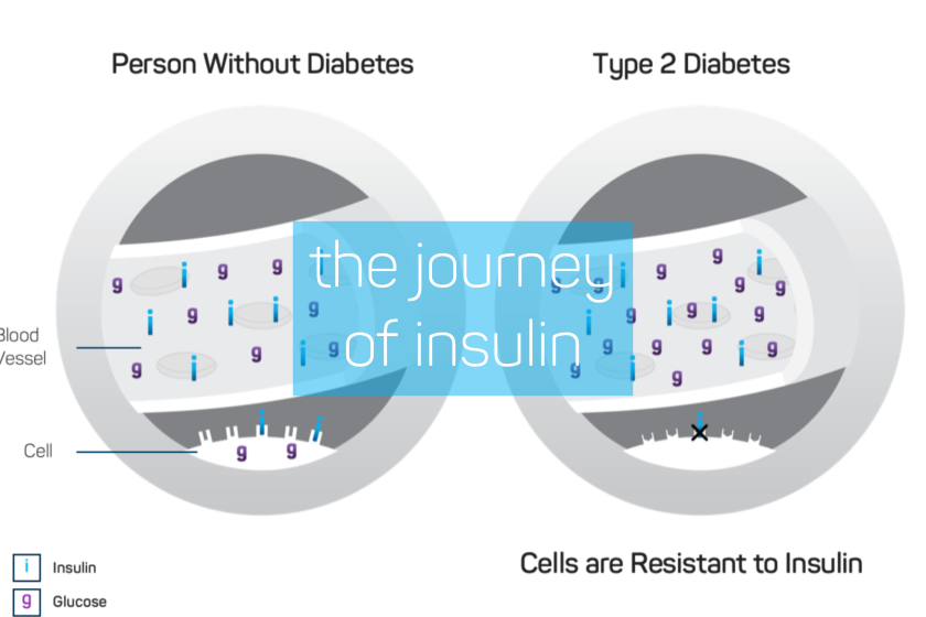 The Journey of Insulin
